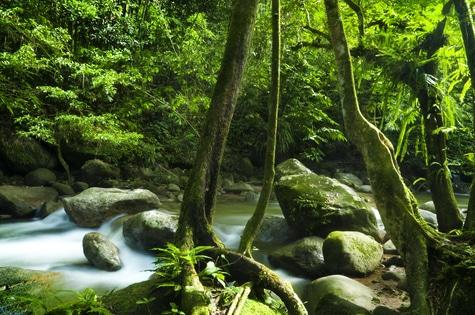 Klanggeschichte Dschungel
