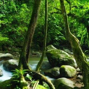 Klanggeschichte Dschungelwanderung