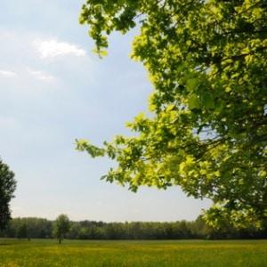 Klanggeschichte Frühlingsspaziergang