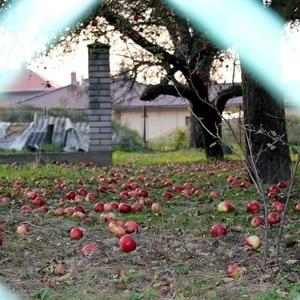 Klanggeschichte Ein Herbsttag